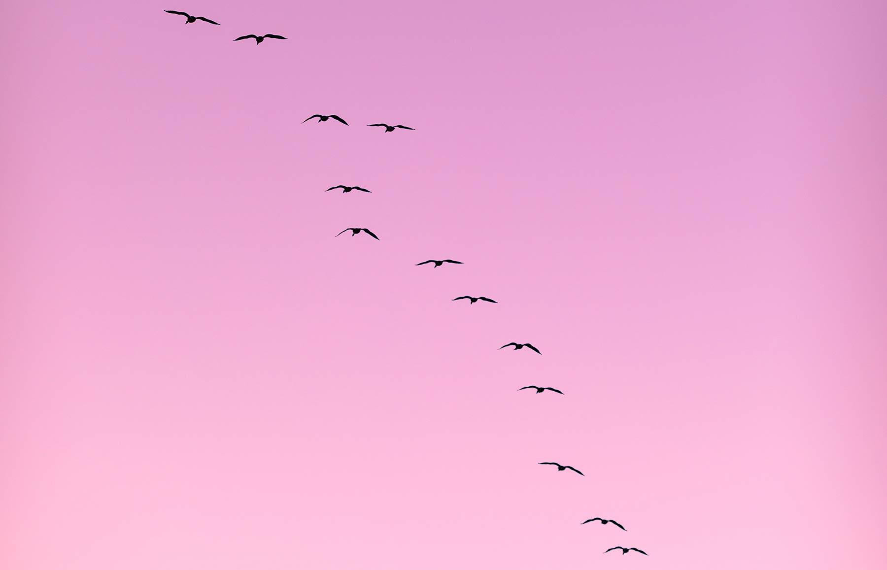 Migration patterns of birds explained